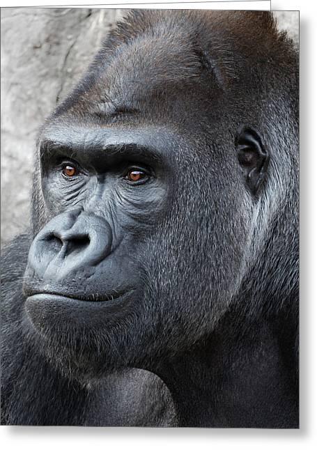Gorillas In The Mist Greeting Card