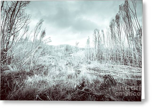 Gormanston Snowscape Greeting Card by Jorgo Photography - Wall Art Gallery