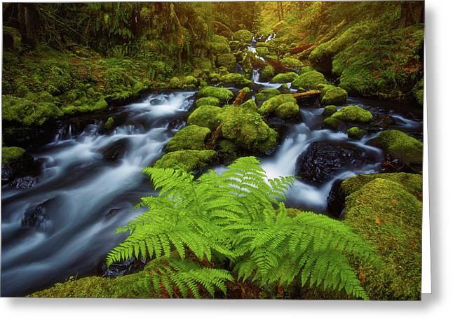 Gorton Creek Fern Greeting Card by Darren White