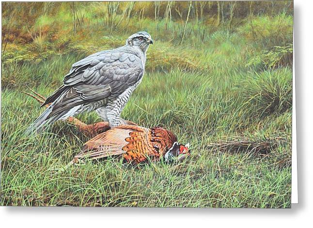 Goshawk Greeting Card