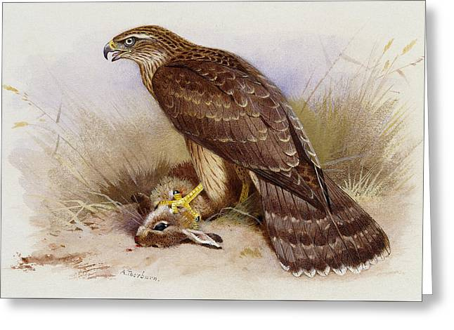 Goshawk Greeting Card by Archibald Thorburn