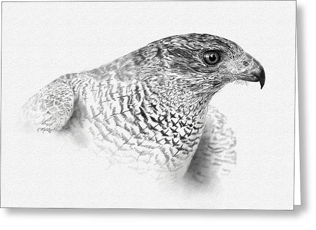 Goshawk Greeting Card by Kathie Miller