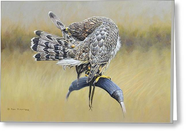 Greeting Card featuring the painting Goshawk Preening by Alan M Hunt