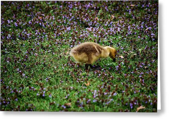 Gosling Series - Hide And Seek Greeting Card by Michelle  BarlondSmith