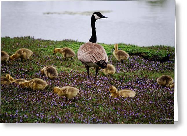 Gosling Series - Mom Greeting Card by Michelle  BarlondSmith