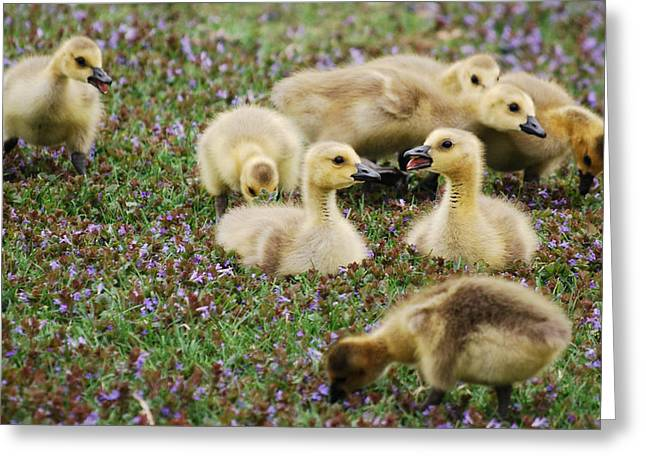 Goslings Series - My Broker Is... Greeting Card by Michelle  BarlondSmith