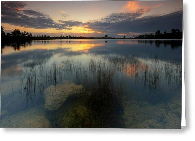 Greeting Card featuring the photograph Gossamer Glades by Mike Lang