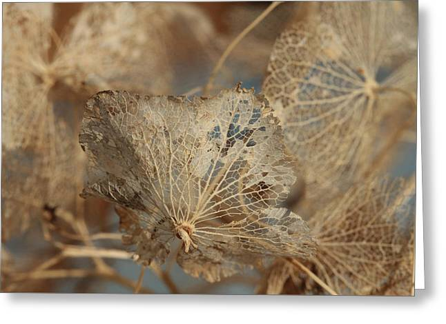 Gossamer - Lace Greeting Card