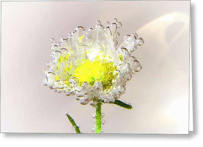 Gossamer Greeting Card by LeAnne Perry