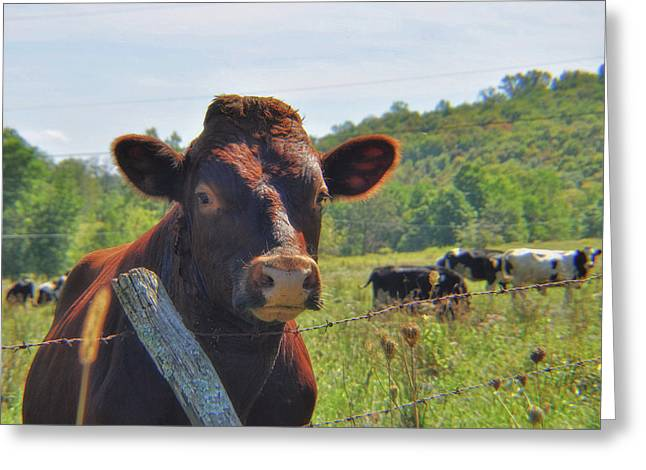 Got Milk Herd Greeting Card by JAMART Photography
