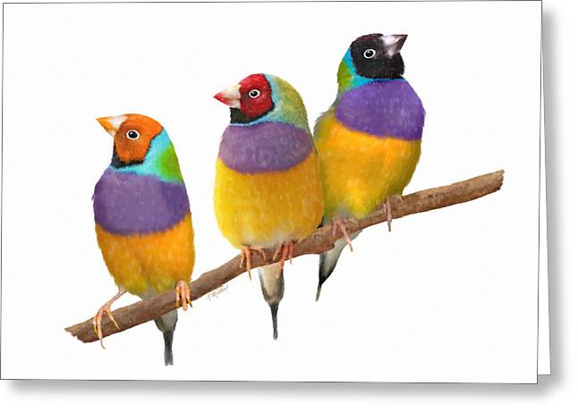 Gouldian Finches Greeting Card by Kathie Miller
