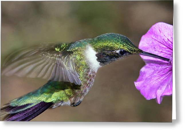 Grace In Green And Purple Greeting Card