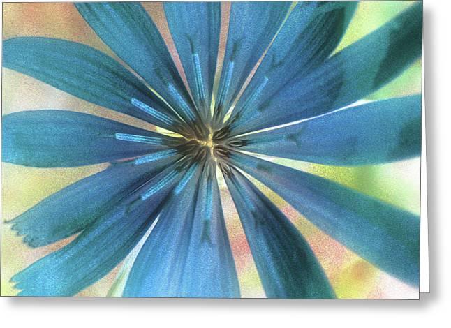 Subtle Colors Greeting Cards - Grace Greeting Card by Molly McPherson