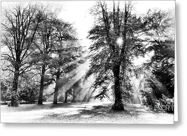 Grace Of Light And Shade Greeting Card by Tim Gainey