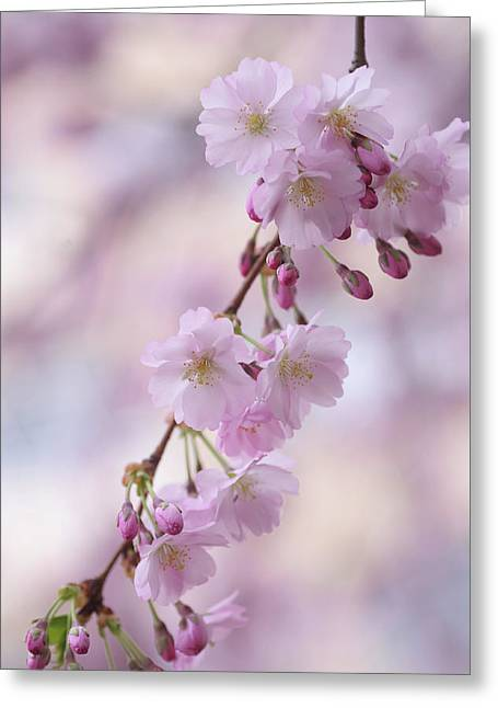 Grace Of Sakura. Spring Pastels Greeting Card by Jenny Rainbow
