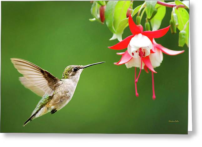 Graceful Beauty Greeting Card by Christina Rollo