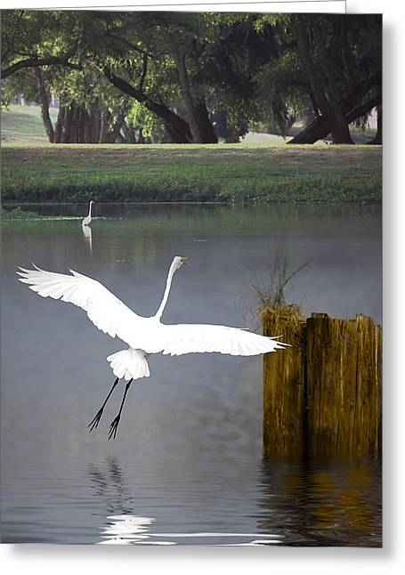 Graceful Greeting Card by Cecil Fuselier