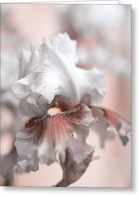 Greeting Card featuring the photograph Graceful Dream by Jenny Rainbow