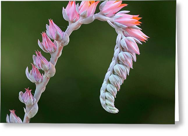 Greeting Card featuring the photograph Graceful by Elvira Butler