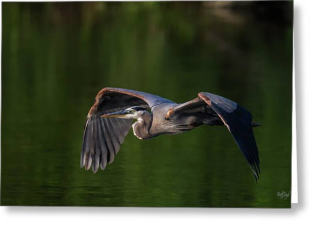Graceful Flight Greeting Card by Everet Regal