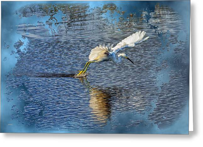 Greeting Card featuring the photograph Graceful Hunter 2 by John M Bailey