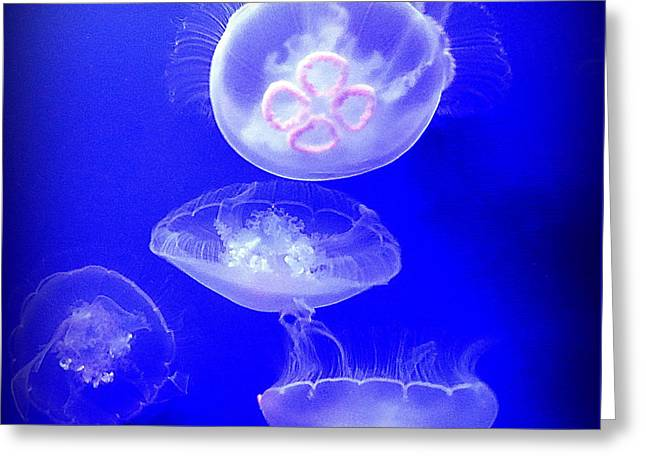 Graceful Jellies - Ballerinas Of The Sea Greeting Card