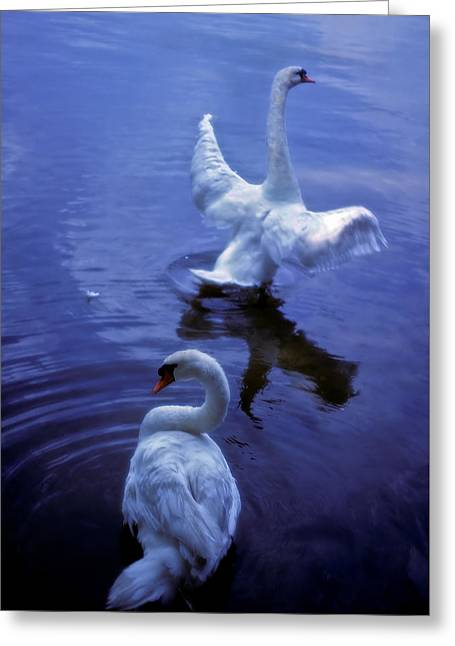 Graceful Swans Greeting Card by Marie Hicks