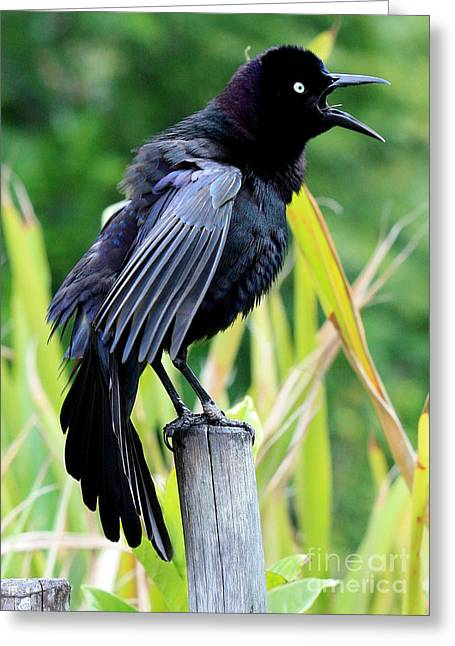 Grackle Love Song Greeting Card by Carol Groenen