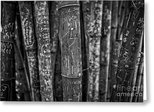 Graffiti Laden Bamboo Black And White Greeting Card by Edward Fielding
