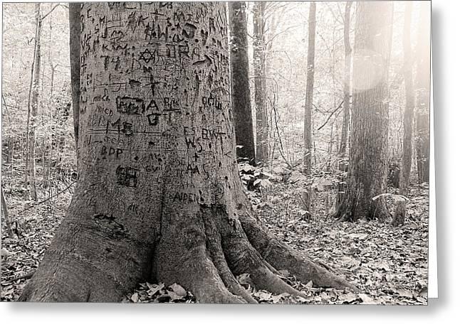 Graffiti Tree Greeting Card by Jon Woodhams