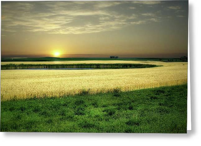 Grain Field Greeting Card