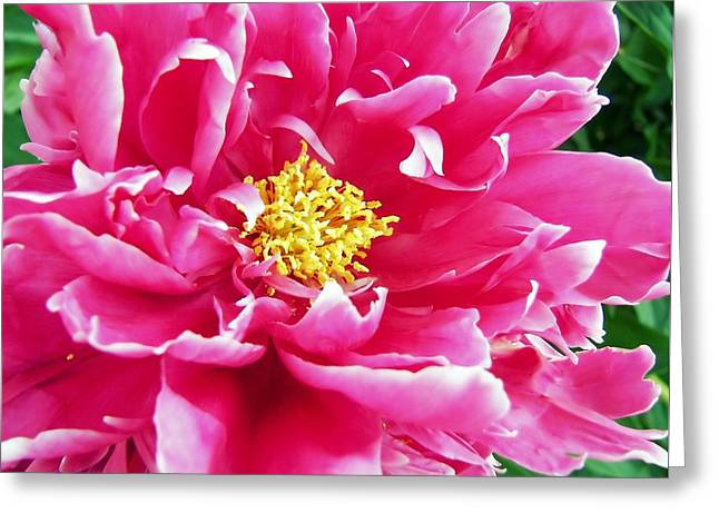 Gram's Peony Greeting Card by JAMART Photography