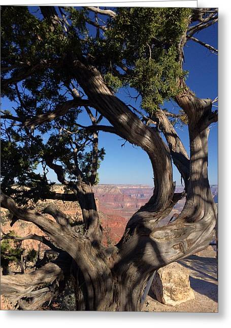 Grand Canyon No. 6 Greeting Card by Sandy Taylor