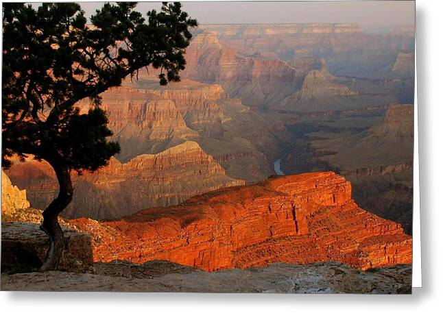Grand Canyon At Sunrise Greeting Card by Stephen  Vecchiotti