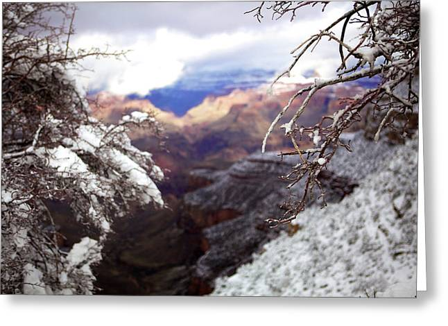 Grand Canyon Branch Greeting Card