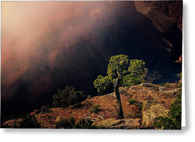 Greeting Card featuring the photograph Grand Canyon Juniper by John Hight