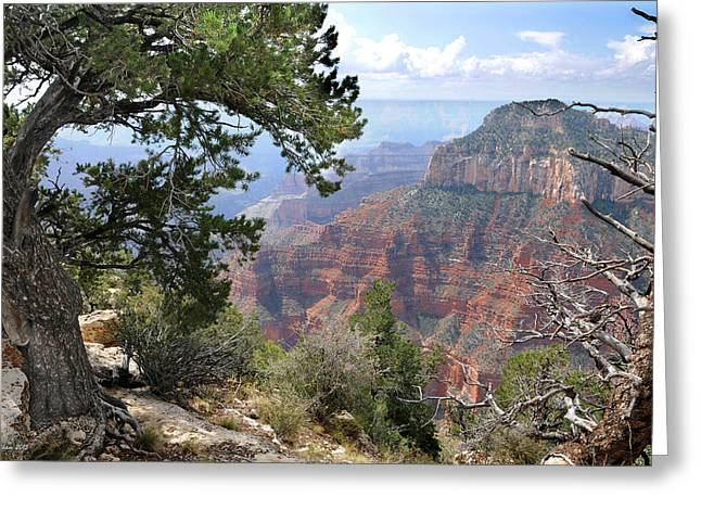 Grand Canyon North Rim - Through The Trees Greeting Card