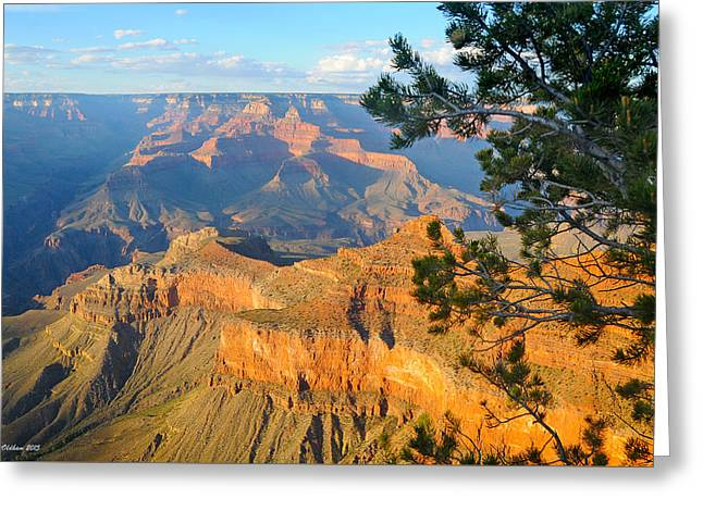 Grand Canyon South Rim - Pine At Right Greeting Card