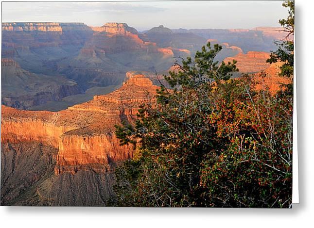 Grand Canyon South Rim - Red Berry Bush Along Path Greeting Card