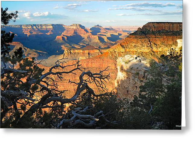 Grand Canyon South Rim - Sunset Through Trees Greeting Card