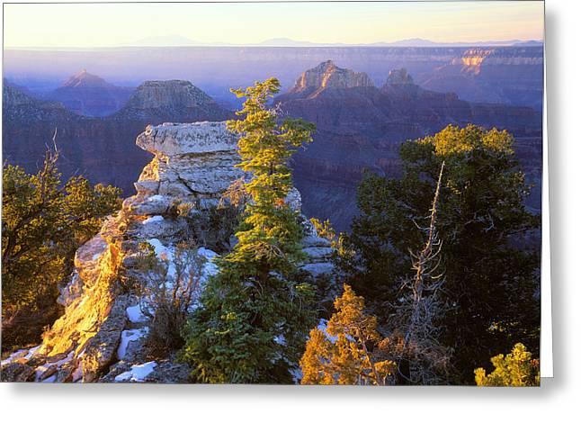 Grand Canyon Sunrise Greeting Card by Johan Elzenga