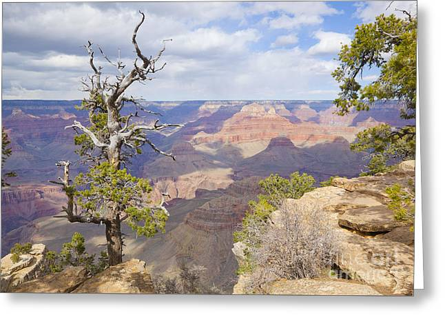 Greeting Card featuring the photograph Grand Canyon View by Chris Dutton