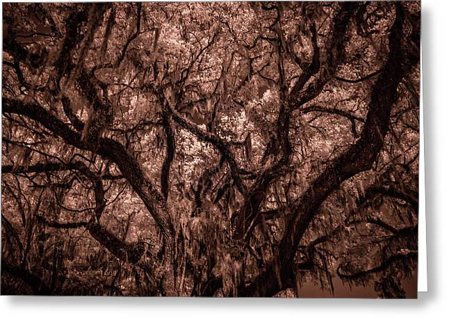 Greeting Card featuring the photograph Grand Daddy Oak Tree In Infrared by Louis Ferreira