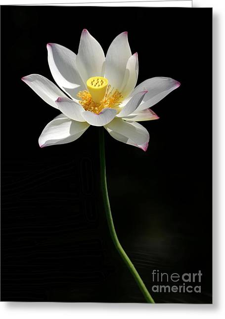 Grand Lotus Greeting Card
