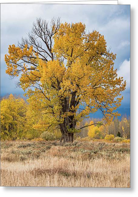 Greeting Card featuring the photograph Grand Old Tree by Chuck Jason