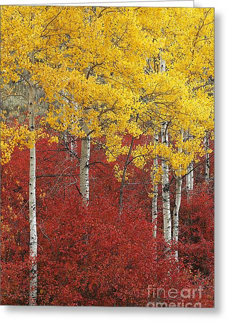 Grand Teton Viii Greeting Card by John Blumenkamp