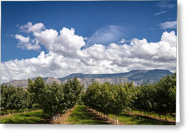 Grand Valley Orchards Greeting Card