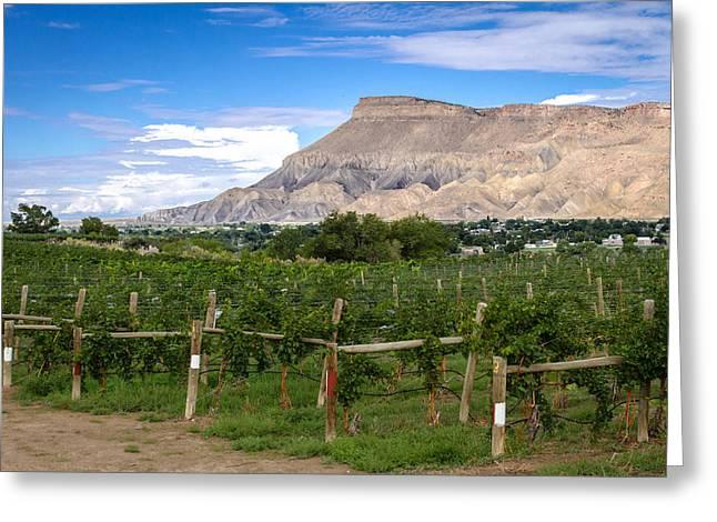 Grand Valley Vineyards Greeting Card
