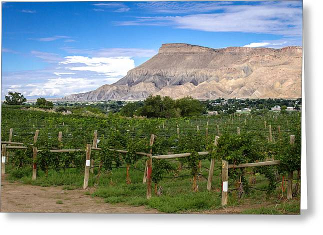 Grand Valley Vineyards Greeting Card