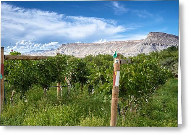 Grand Valley Wine Vineyards Greeting Card by Teri Virbickis